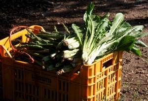 cesto di verdure bio