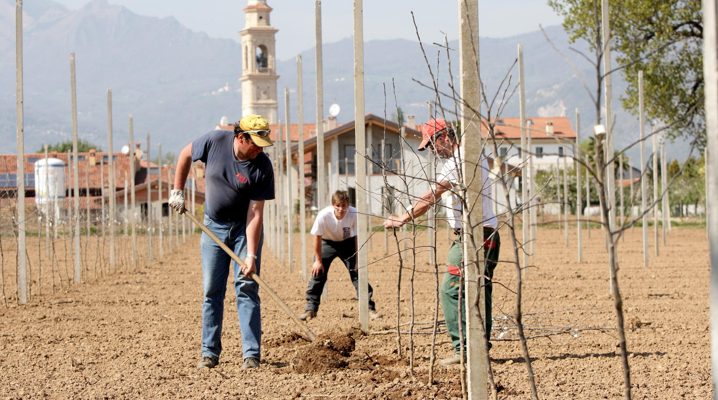 piantare-alberi-di-mela