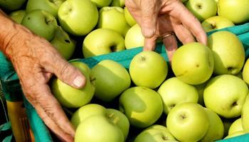 scambio prodotti bio